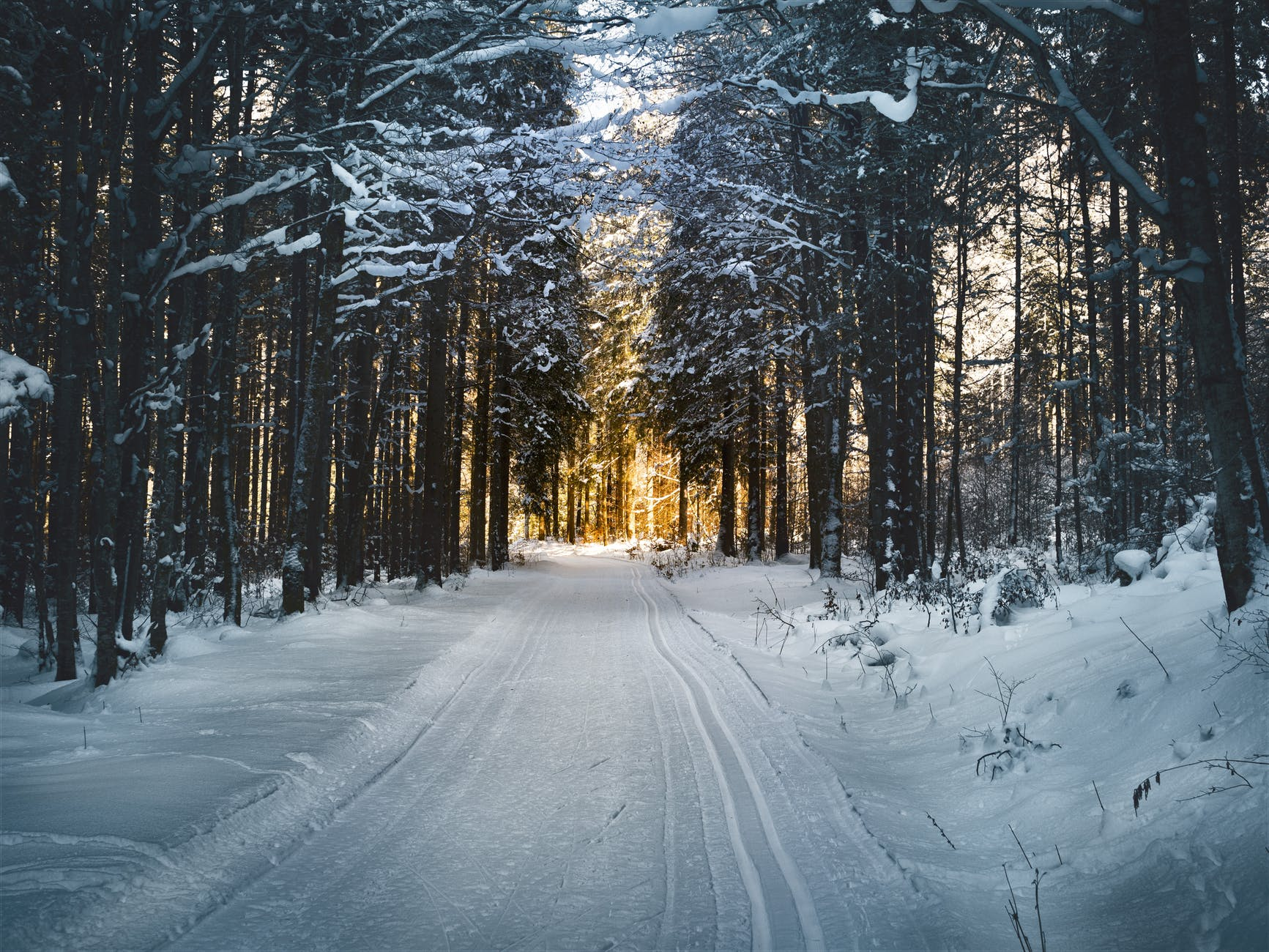 landscape photography of snow pathway between trees during winter
